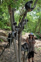 GIBBON APES, KHAO SAM ROI YOT NATIONAL PARK, PRACHUAP KHIRI KHAN PROVINCE, THAILAND, ASIA