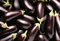 Lots of aubergines filling the picture