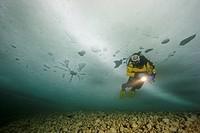 Eistaucher unter dem Eis, ice diving