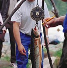 Weighing a Freshly Caught Salmon