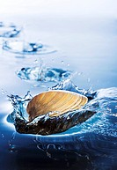 Clam Skipping Over Water, Water Splash