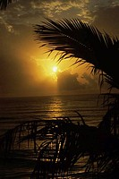 Silhouette of palm trees on the beach, Yucatan, Mexico
