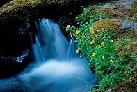 Watson Falls, Umpqua National Forest, Oregon, USA