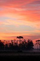 Silhouette of trees at sunset, Florida, USA