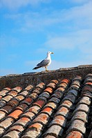 Spain, Catalonia, Costa Brava, Tossa de Mar, one seagal on a roof