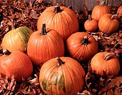 Close_up of pumpkins with fallen leaves