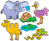 Tropical animals collection _ isolated illustration.