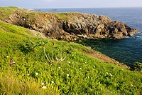 coast, Pointe de Saint Mathieu, Brittany, France