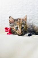 Kitten wearing bow on bed