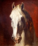 Head of a White Horse by Theodore Gericault, France, Paris, Musee du Louvre