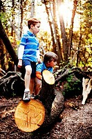 Boys hiking in a forest
