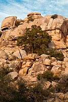 Rock formations in a desert, Joshua Tree National Monument, California, USA