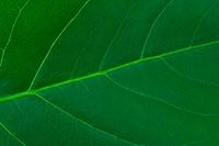 Macro of leaf