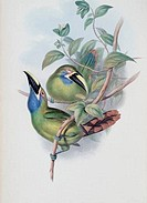 Blue_throated Groove_bill Toucan John Gould 1804_1881 British