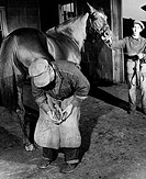 Farrier fixing a horseshoe on a horse´s hoof Equus caballus