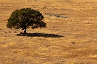 A lone tree in a grassy field.
