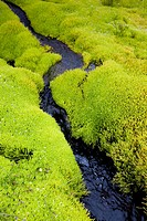 Wet moss over volcanic rocks  Iceland
