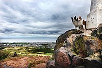 Scotland, City of Edinburgh, Edinburgh. Dogs on top of Arthur's Seat overlooking Edinburgh and the Firth of Forth