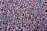 Background of blueberries
