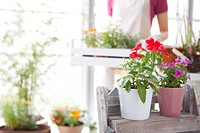 Young woman moving potted flowers