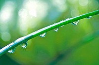 Dew drops on grass, close_up