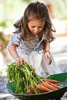 Cute girl putting carrots in a wheelbarrow