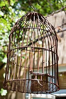 Close_up of a birdcage