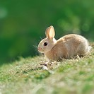 A rabbit playing on the grass