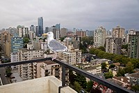 View from balcony with seagull perched on railing, Vancouver, B.C., Canada