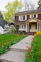 A two story vintage home with tulip flowers in Holland, Michigan, USA