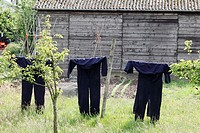 Overalls on clothesline, Netherlands