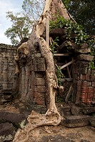 Tree roots growing over walls of Khmer temple ruins, Ta Prohm, Angkor, Siem Riep, Cambodia