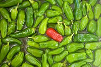 Single red chili pepper in heap of green chili peppers