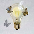Moths flying around illuminated light bulb, one moth's wing burned