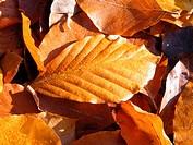 Herbstlaub mit Tautropfen
