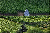 Europe, Germany, Hesse, View of trullo house in vineyard