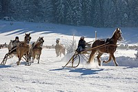 Germany, Bavaria, Upper Bavaria, Rottach_Egern, View of horsedrawn sleigh racing