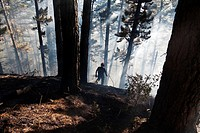 Firefighter walking on burned land in San Cristobal de Zumarraga. Although these fires are uncommon around this area, combination of dry weather and a...