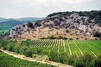 La Butte (a rise) du Leves, is a small hill surrounded by vineyards near Montesquieu, (Faugeres area) France