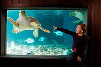 Girl pointing at sea turtle in aquarium