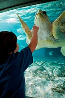 Boy pointing at sea turtle in aquarium