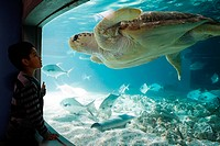 Boy watching sea turtle in aquarium