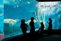 Children watching fish in aquarium