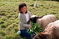 Girl feeding sheep in field