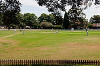 Cricket at Petersham Oval