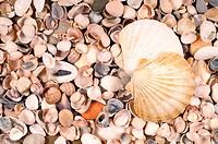 big and small shells
