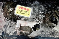 Naha (Japan): fresh, skinned globe-fishes sold at the Makishi Market