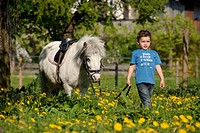 boy and Shetland pony horse _ walking on meadow