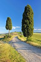 Italy, Tuscany, Province of Siena, Monte Amiata, Val d´Orcia, Pienza, View of cypress trees along dirt road