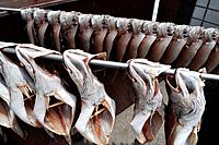 Busan (South Korea): fish drying at the Sindonga-Jagalchi Market